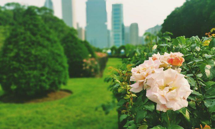 Grant Park garden